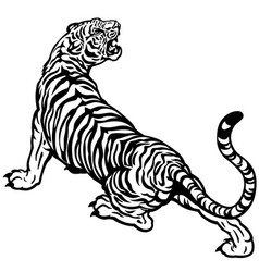 angry tiger black white vector image vector image