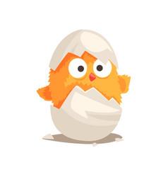 funny yellow newborn chicken in broken egg shell vector image