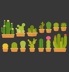 cactus collection in pots vector image vector image