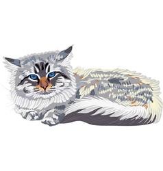 Cat breed siberian vector