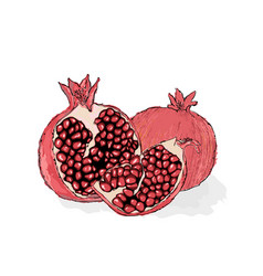 red ripe pomegranate a piece of pomegranate juicy vector image