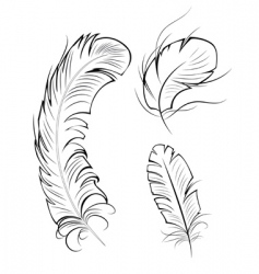 three contour feathers vector image