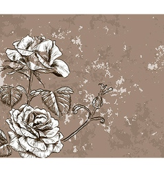 Vintage Rose Sketch vector