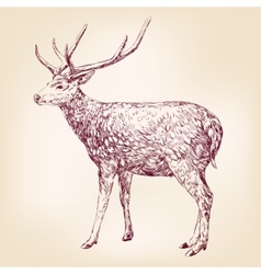 Deer hand drawn llustration realistic sketch vector image vector image