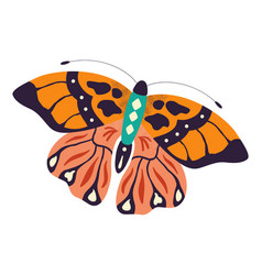 Colorful hand drawn butterfly on white vector