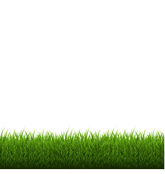 Grass border isolated vector