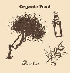 Hand drawn vintage olive set vector