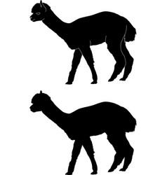 Alapca silhouette vector