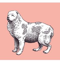 Dog Shepherd Caucasian Mid-Asian vector