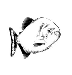 drawing fish in black color isolated on vector image