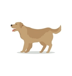 Golden Retriever Dog Isolated on White Labrador vector image