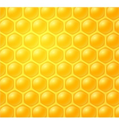 Honey making in honeycombs vector