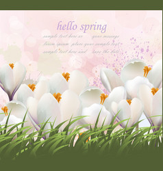 hello spring flowers card watercolor white vector image