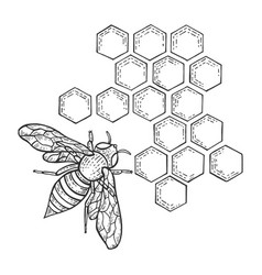 bee insect and honeycomb sketch engraving vector image