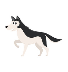 Cute black and white husky dog character with vector