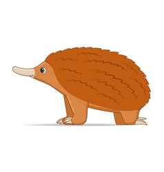 echidna animal standing on a white background vector image