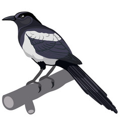 magpie bird in natural style isolated object on a vector image
