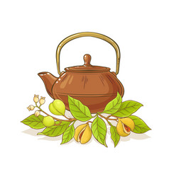 nutmeg tea vector image