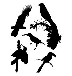 black birds silhouette vector image