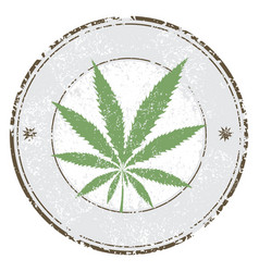 cannabis or marijuana leaf grunge design in vector image