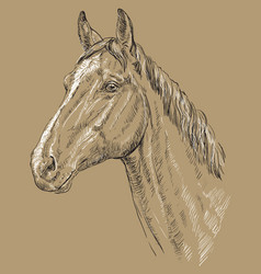 horse portrait-1 on brown background vector image