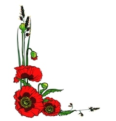 Poppies isolated on white vector
