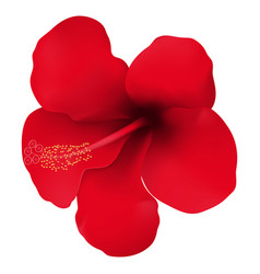 realistic red tropical flower hibiscus vector image