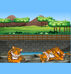 Scene with two tigers in zoo vector