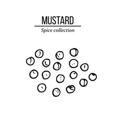 Spice collection mustard seed hand drawn vector