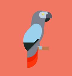 parrot bird breed species animal nature tropical vector image vector image