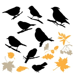 Birds and Plants Silhouettes vector image