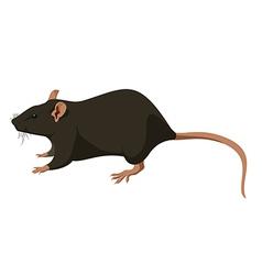 Rat nature vector image vector image