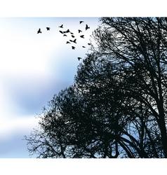 Flocks vector
