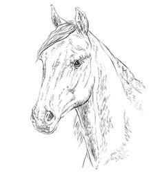 horse portrait-3 vector image