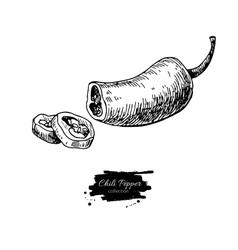 Chili Pepper hand drawn vector image