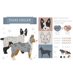 Designer crossbreed hybrid mix dogs collection vector