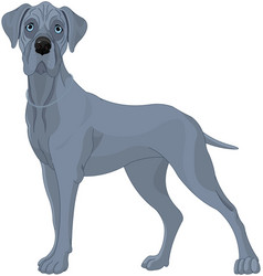 Great danes dog vector