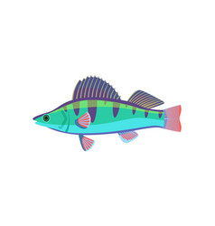 colorful fish type closeup vector image