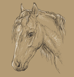horse portrait-8 on brown background vector image