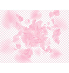 pink roses petals falling on transparent vector image