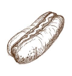 vintage hot dog drawing fast food great for menu vector image