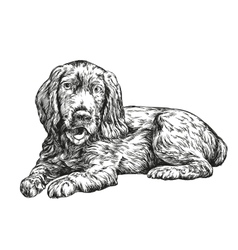 dog spaniel hand drawn llustration vector image