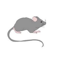mouse is drawing color vector image