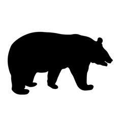 black silhouette of running bear on white vector image