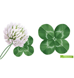 Four leaf clover and clover flower 3d realistic vector