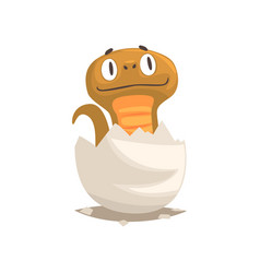 funny snake baby in broken egg shell vector image