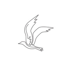one continuous line drawing beauty seagull vector image
