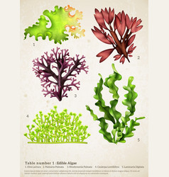 Sea weed realistic collection vector