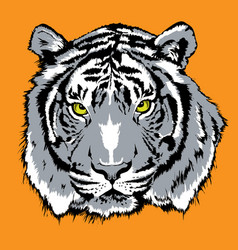 tiger bengal old vector image