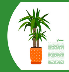 yucca plant in pot banner vector image